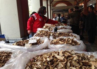 Funghi in Alba